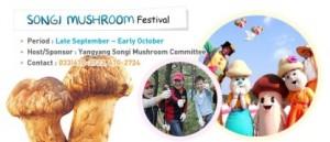 songi festival