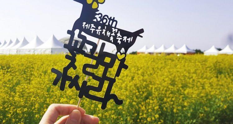 Jeju Canola festival feature